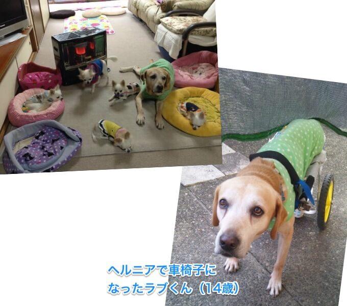 20150326 docomo pet insurance07